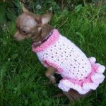 Keep Your Dog Warm With A Crochet Dog Sweater