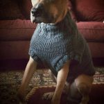 The Ozzie large dog sweater pattern by Jenna Greer
